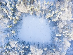 Aerial view of the winter forest from above