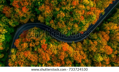 aerial view of thick forest in...