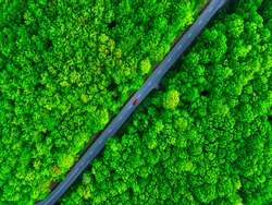 Aerial view of thick green forest in summer with road cutting through it. Red car on the road