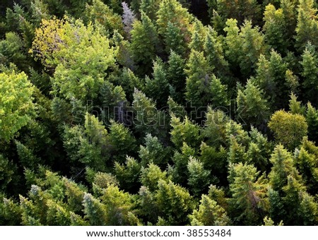 Aerial view of trees in New Brunswick, Canada.