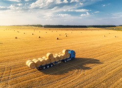 Aerial view of truck with hay bales. Agricultural machinery. Chamfered field and hay stacks after harvesting grain crops at sunset. Top View. Tractor loads bales of hay on truck with trailer. Harvest
