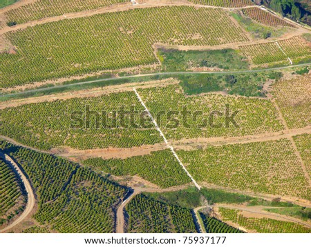 Aerial view of vineyard in the south of France, Banyuls sur Mer, Pyrenees Orientales, Languedoc Roussillon