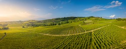 Aerial view of vineyards in Langhe, Piedmont, Italy