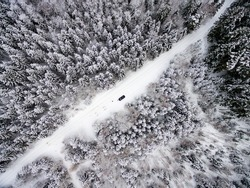 aerial view of winter forest covered in snow. drone photography