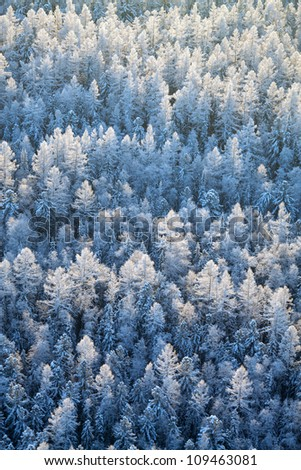 Aerial view of winter forest during frosty day.