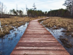 Aerial view of wooden walkway on the territory of Sestroretsk swamp, ecological trail path - route walkways laid in the swamp, reserve