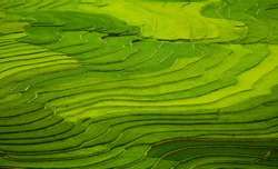 Aerial view on the rice fields of Tu Le valley, between Nghia Lo and Mu Cang Chai.  Abstract lines of rice fields.