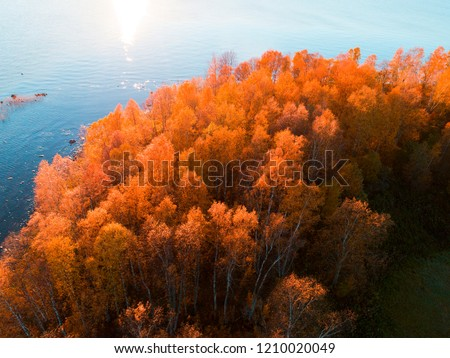 Aerial view over forest during vibrant autumn colors. Aerial view of seashore with stone. Coastline with water. Aerial drone view of forest with yellow trees and beautiful lake landscape from above #1210020049