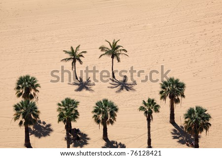 Aerial view over palm trees on the beach. Playa de Las Teresitas, Canary Island Tenerife, Spain.