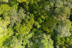 Aerial view photography directly above lush rain forest trees. Untouched jungle, view of the tree tops. Habitat for wild animals and endangered animal species. Dense tropical forest. top view