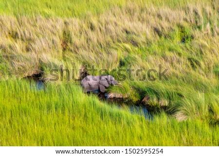 Aerial view to bush of delta Okavango with elephant.