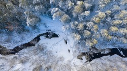 Aerial view to the fresh snow clad winter woodland scene with the section of partly frozen bending river