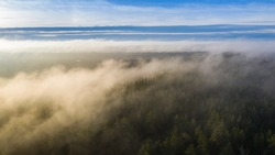 Aerial view to the heavy sunrise golden fog clad forested dunes and peat-bog on distant background