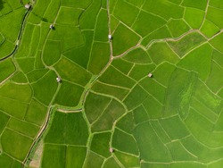 Aerial view Top view Green fields Start the planting season Summer of Thailand.