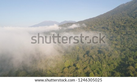 aerial view tropical forest covered clouds with lush vegetation and mountains, java island. tropical landscape, rainforest in mountainous area Indonesia. green, lush vegetation. #1246305025
