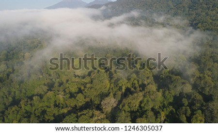 aerial view tropical forest covered clouds with lush vegetation and mountains, java island. tropical landscape, rainforest in mountainous area Indonesia. green, lush vegetation. #1246305037