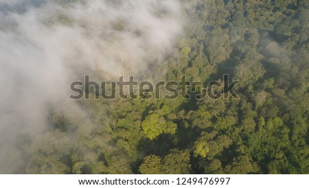 aerial view tropical forest covered clouds with lush vegetation and mountains, java island. tropical landscape, rainforest in mountainous area Indonesia. green, lush vegetation. #1249476997