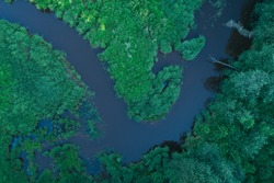aerial view wild river in the forest summer time