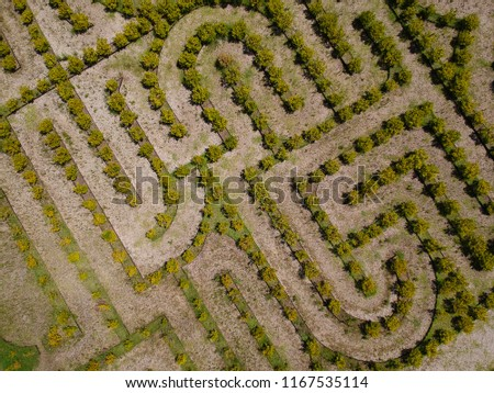 Aerial view with drone of a labyrinth of natural plants in Tigre, Buenos Aires, Argentina