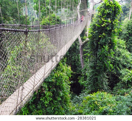 Aerial walkway disappearing into the distance across the rain forest in Ghana