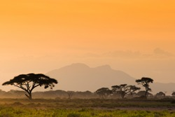 Afican savannah in evening light