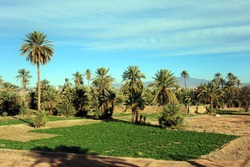 Africa - Atlante and Sarah desert - Lush oasis landscape in the Moroccan desert, with date palms . One of the biggest oases in Morocco. Adventure travel.