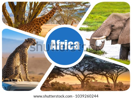 Africa Journey Through Concept Of Design Fauna Kenya African Elephant Wild Animals Group Collage