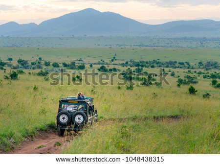 Africa safari jeep driving on Masai Mara and Serengeti national park on green savannah with blue sky. Tourists driving jeep for safari in Kenya and Tanzania in East Africa to watch animals.