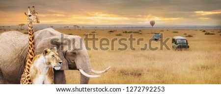 Africa Safari wild safari animals in corner of web banner or social media cover with vehicles and hot air balloon #1272792253