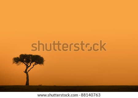 African acacia tree at sunset