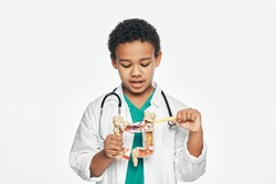 African American boy during learning human anatomy, holds an anatomical intestines model, to study body structure