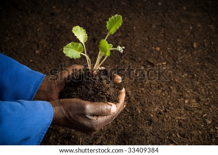 African American Farmer Holding New Plant in Hands