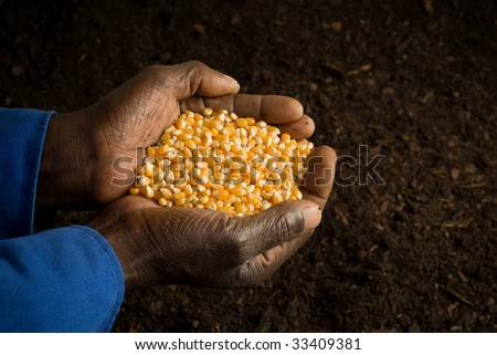 African American Farmer Holding Seeds in Hands with Prepared Soil in Background