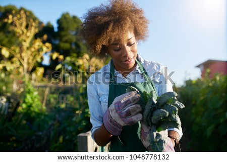 african american female gardener inspecting freshly picked kale from urban community garden #1048778132