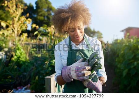 african american female gardener inspecting freshly picked kale from urban community garden #1054297799