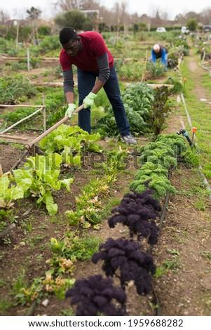 African american man horticulturist with mattock working in garden outdoor Stock photo ©