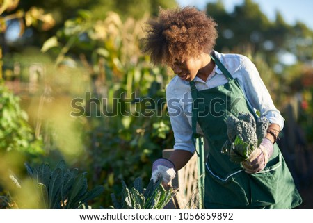 african american woman tending to the kale in a community garden #1056859892