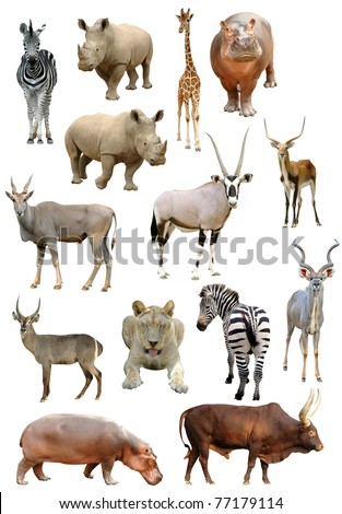 african animals collection isolated on white background #77179114