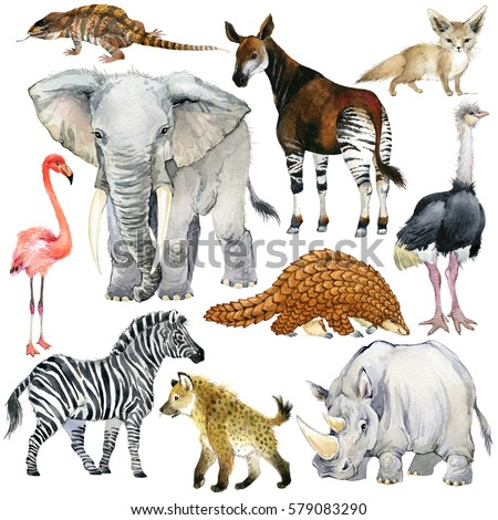 african animals watercolor collection. lizard. elephant. fox. flamingos. okapi. ostrich. pangolin. rhinoceros. hyena. zebra. armadillo