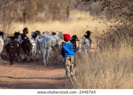 African boy, Kalahari desert, taking the goats home
