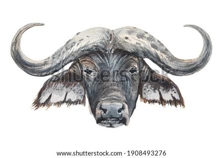 African buffalo portrait watercolor illustration isolated on. white background print for t-shirts, sweatshirts, hoodies. Wild animal safari bull head.  Stok fotoğraf ©