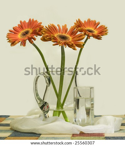 African daisy and glass - stock photo