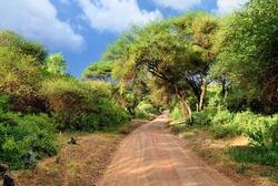 African dirt road in tropical Africa near Manyara Lake  at sunset time, Tanzania