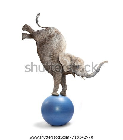 African elephant elephant balancing on a ball. Funny animals isolated on white background.