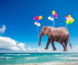 African elephant fly on the color air balloons