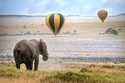 African elephant ,  foggy morning, hot air balloons landing on background,  Masai Mara National Reserve, Kenya