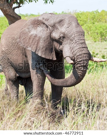 nude mud baths. small busty young Elephant having a mud bath