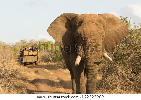 African elephant in front of a game viewer
