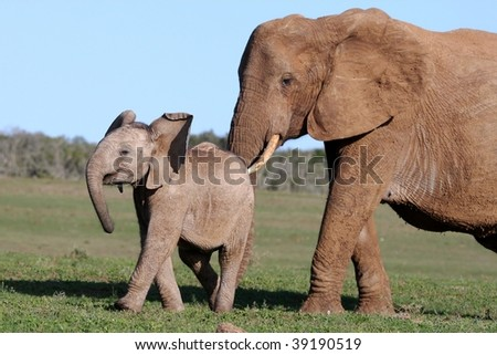 African elephant mother prodding it's baby to move on
