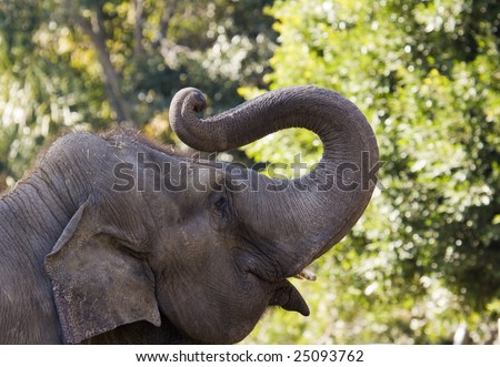 African Elephant Observing - stock photo